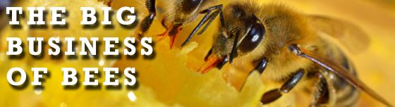 big biz bees